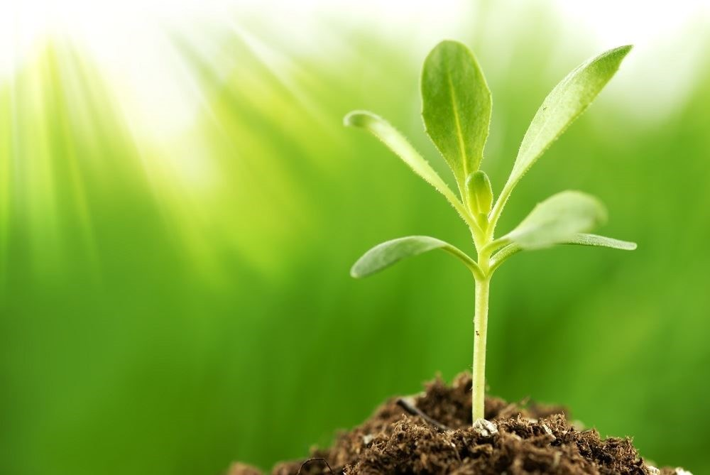 Growing 101: Plant Biology Basics